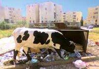 recyclage des déchets?!!