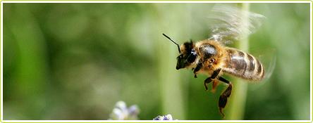28-miel-abeille