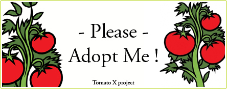 Tomato X project : adoptez un plant de tomates !