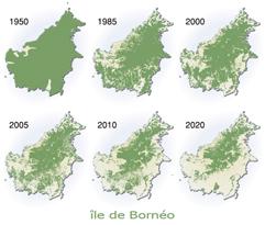 Evolution de la déforestation sur l'ïle de Bornéo