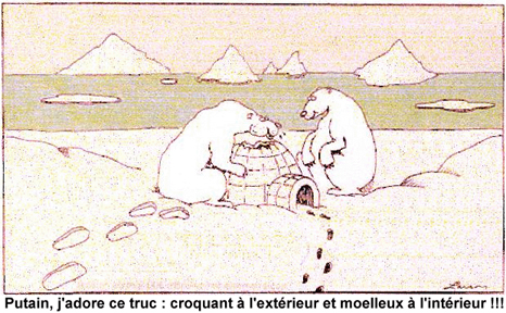 Humour : l'ours blanc aussi aime les igloo !