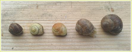 22-escargots