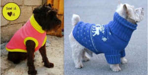 manteau chien pull
