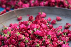 roses Meena Kadri