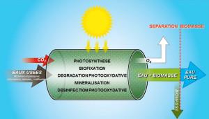 Purification Bio solaire